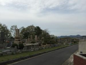 鵯越墓園 じんちょうげ