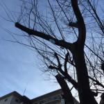 魚崎墓地、鳥の糞被害防止