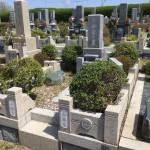 鵯越墓園で植木の撤去工事