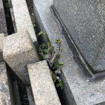 神戸市鵯越墓園で玉垣の修理とレジンストーンを使ったお墓の防草工事を行いました。